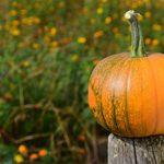 pumpkin ok