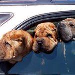 kutyakepauto