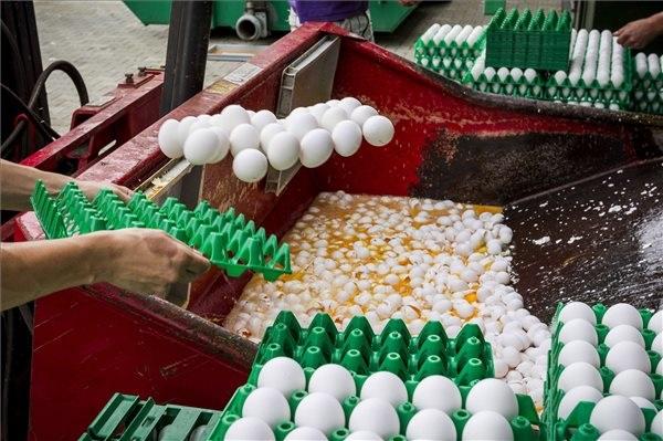 Biztonságos a magyar tojás