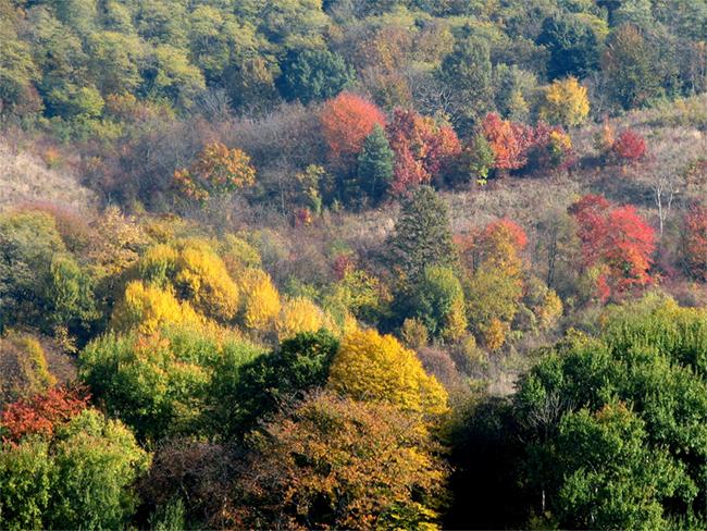 Őszi túralehetőségek a somogyi erdőkben
