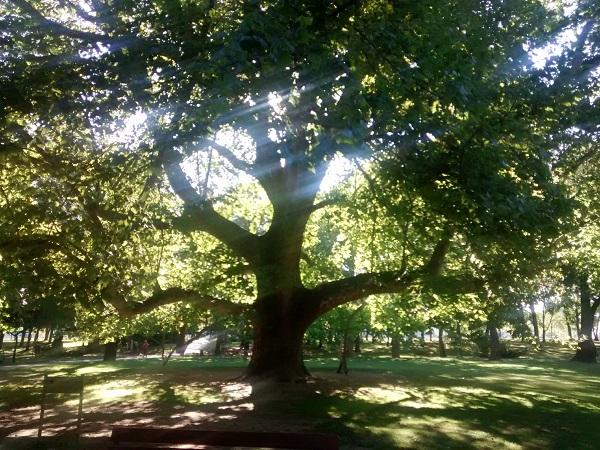 Fogadj örökbe egy fát!