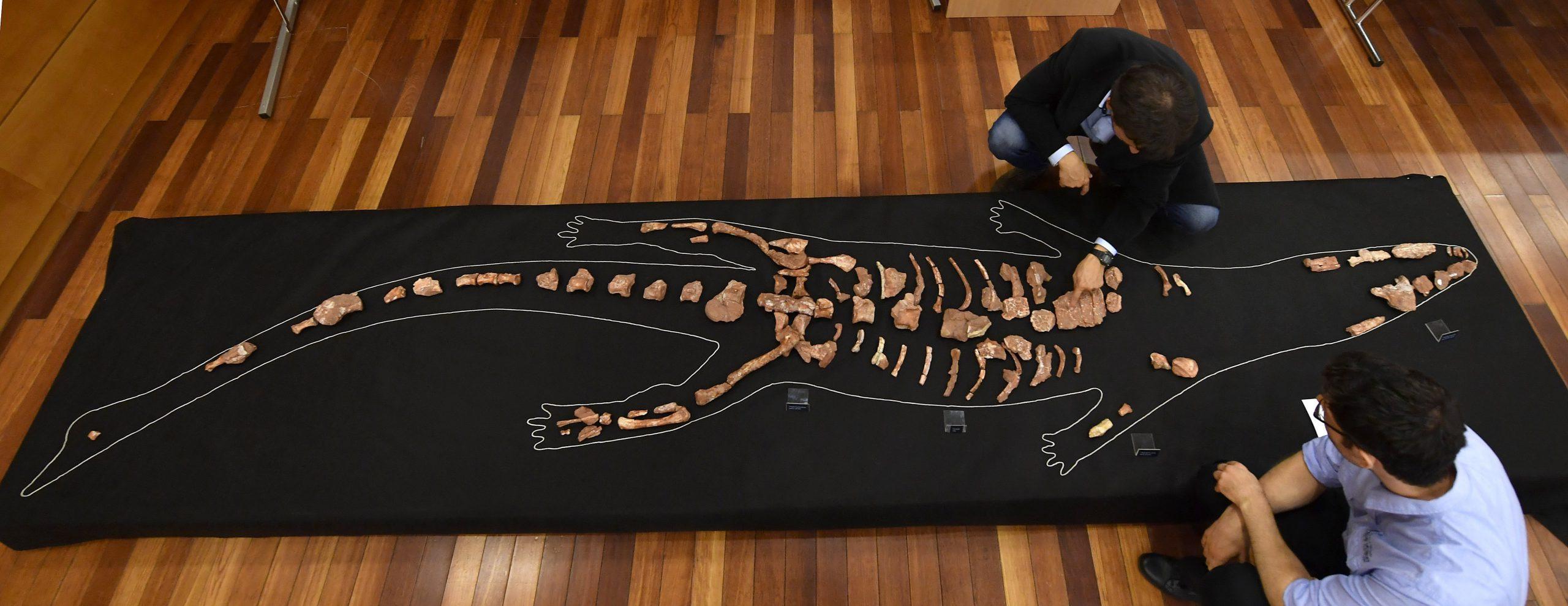 Nemzetközi szaklapban jelent meg a gerecsei őskrokodilról szóló kutatás