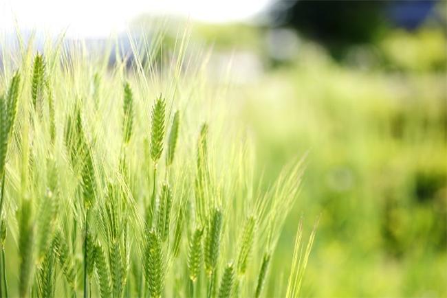 Közös nyilatkozat az agrárinnováció fejlesztéséről