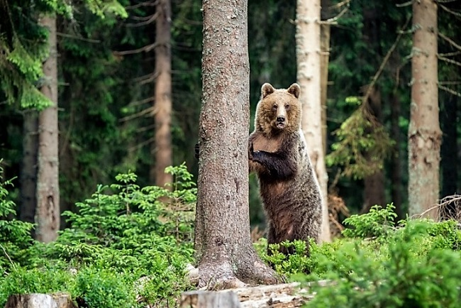 Szelfitilalom: a medve nem játék
