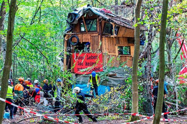 Mesél a hambachi erdő