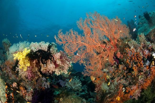 Június 8-a az óceánok világnapja