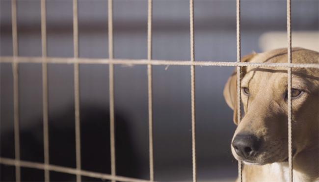 KUTYASZEMMEL - A kutyák ügye közös ügyünk