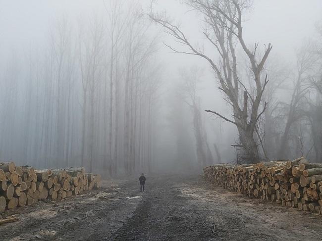 Védett erdőt pusztítottak el a Tiszánál