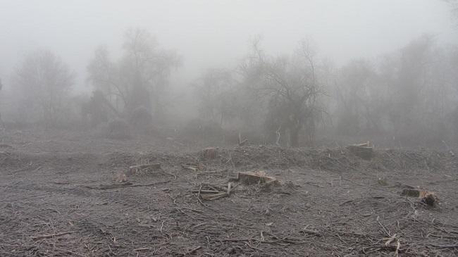 Tiszai tarvágás - WWF reakció az OVF közleményére