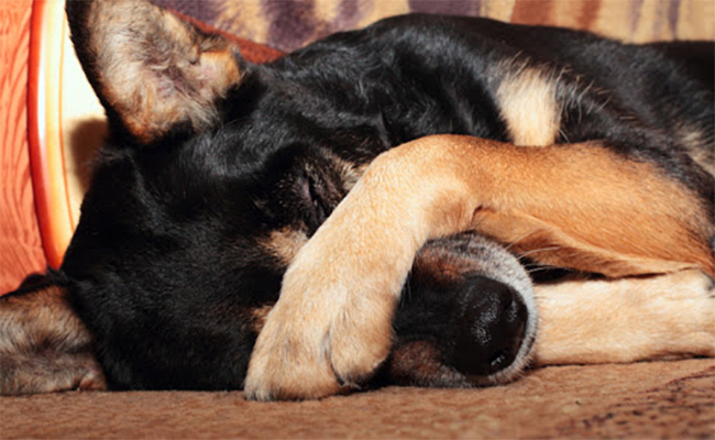 kutyakesatestbeszed
