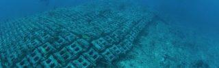 A legutóbbi jégkorszak óta fennmaradt tengeri moszatokat azonosítottak Skócia partjainál