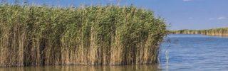 Az LMP kiáll a Velencei-tó természetes partszakaszának megóvása mellett