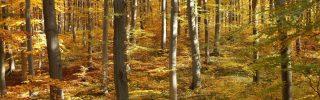 Az őszi erdő gyümölcsei a Pilisi Parkerdőben