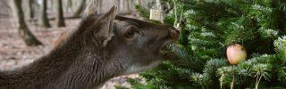 """""""Állatok karácsonya"""" -  a Budakeszi Vadaspark rajzpályázata"""