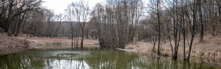 Új erdőrezervátum a Pilisi Parkerdőben