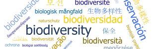 A nem angol nyelvű tudomány segíthet a biológiai sokféleség megőrzésében