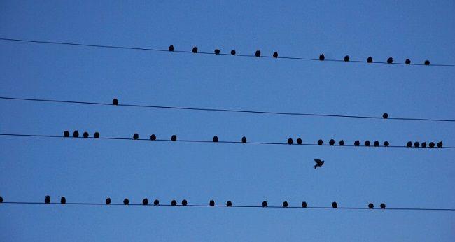 madarakvezeteken
